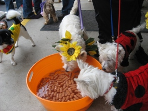 bobbing for weinies