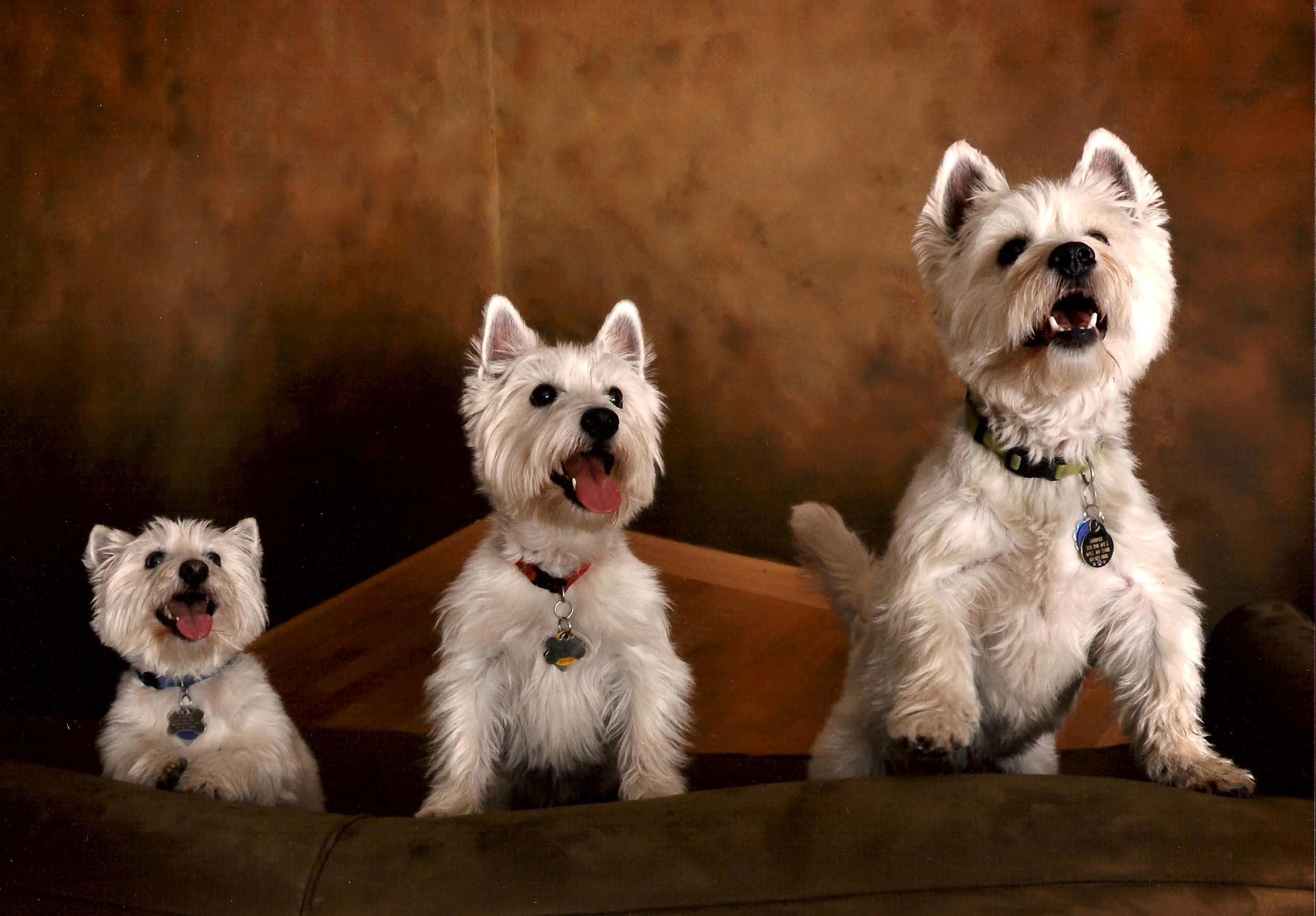 dog goodgriefpetloss u0027s blog