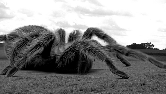 Giant Spider Goodgriefpetloss S Blog